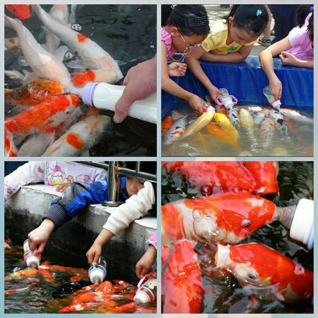 عکس/ماهیان شیرخوار زیبا !