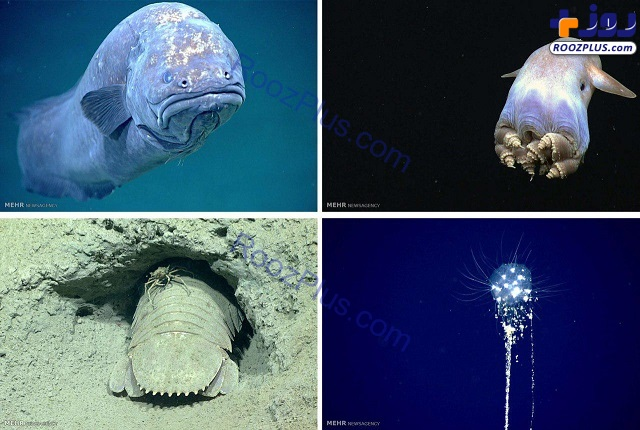 حیوانات عجیب در اعماق خلیج مکزیک+عکس