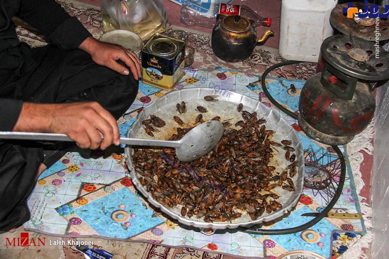 خوردن جیرجیرک در کرمان/ انواع غذا با جیرجیرک سرخ شده!+تصاویر