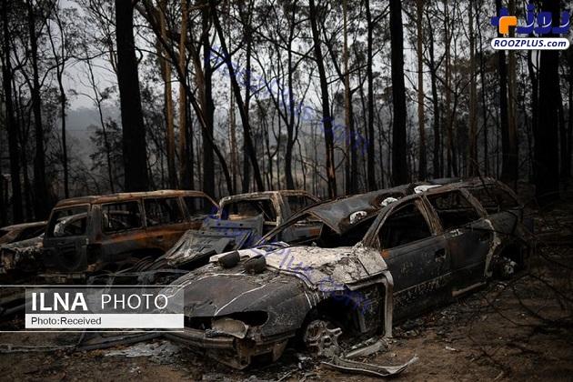 جنگل های سوخته استرالیا +عکس