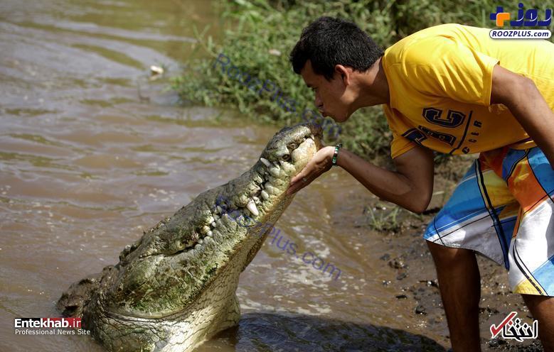 بوسیدن یک تمساح در کاستاریکا +عکس