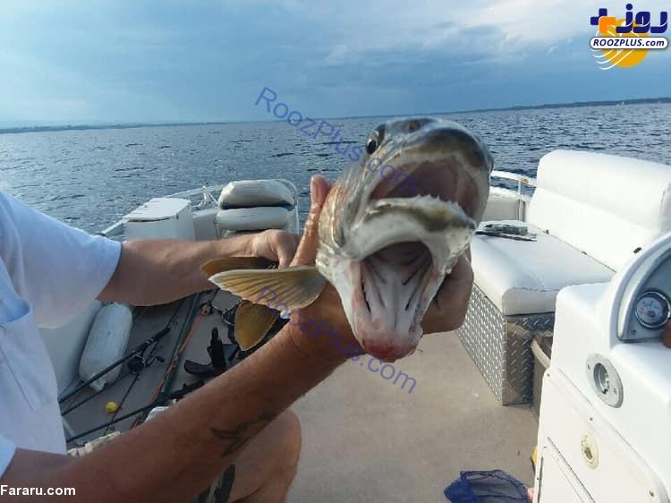 عكس/صید یک ماهی که دو دهان دارد!