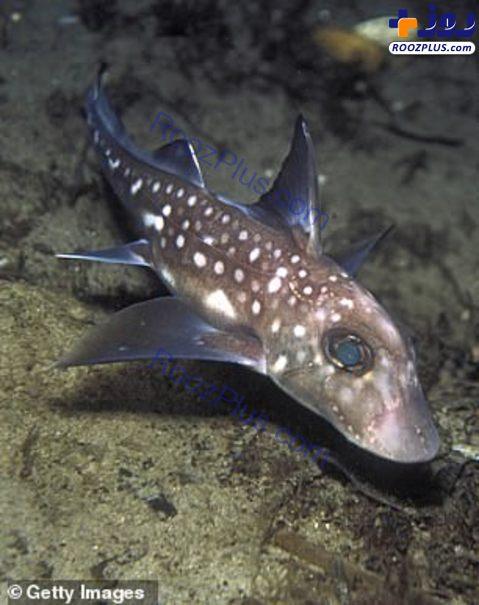 صید ماهی عجیب از نوادههای دایناسور +تصاویر