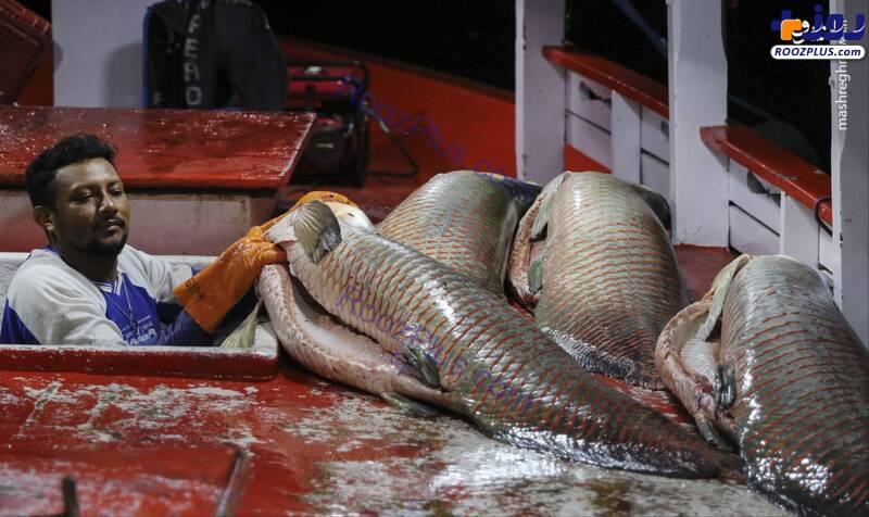 صید ماهیهایی بزرگتر از آدم +عکس