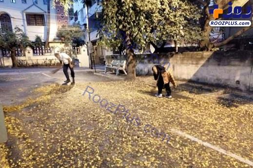 تمیز کردن خیابان توسط آقای وزیر و همسرش+عکس