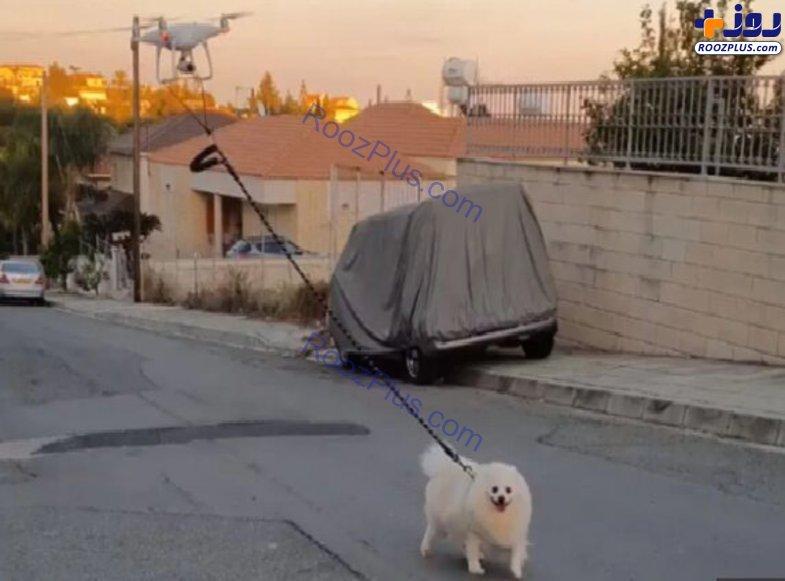 پیادهروی یک سگ با کمک پهپاد برای فرار از کرونا! +عکس
