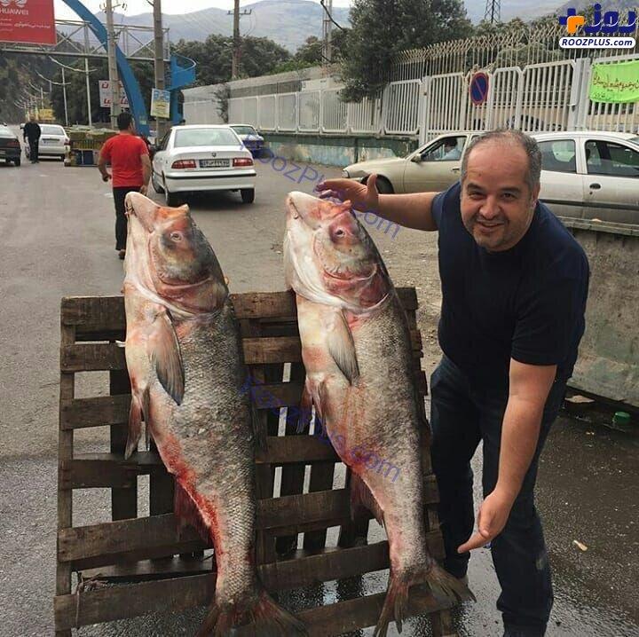 ماهی های 40 کیلویی صید شده از سفیدرود در گیلان +عکس