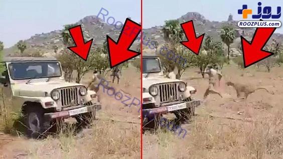 لحظه وحشتناک حمله پلنگ به مامور جنگلبانی! +عکس