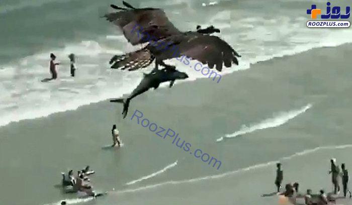 صحنه عجیب پرواز عقاب با کوسه در آسمان! +عکس
