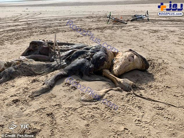 پیدا شدن جانور عجیب الخلقه در ساحل دریا!+عکس